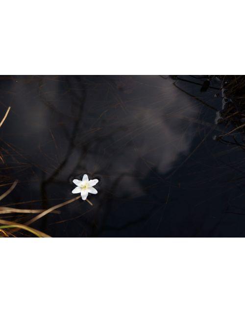 Photography | Windflower