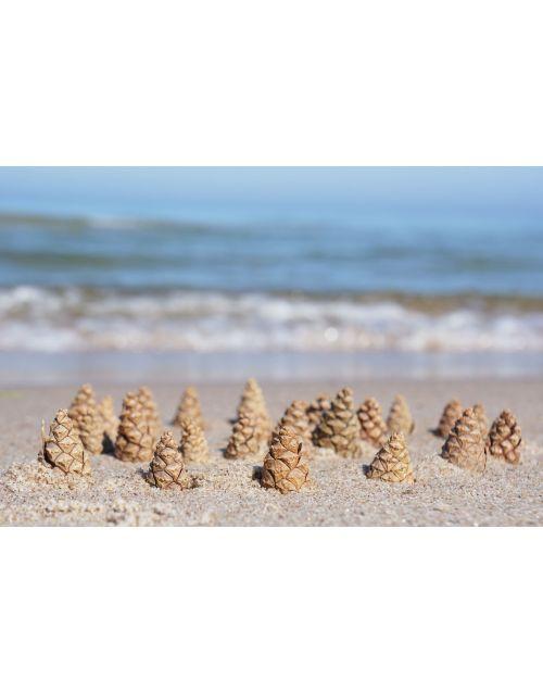 Pine's sea